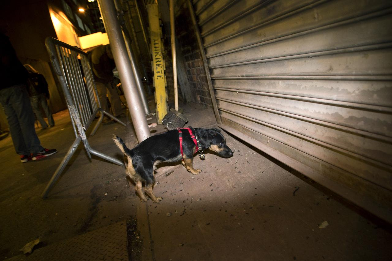 Ernie searches for rats in an alleyway near City Hall Park.