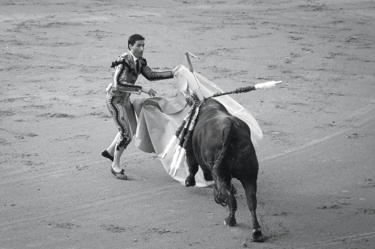 A banderillero capes the bull with his capote during one of the fights of the Goyesca.