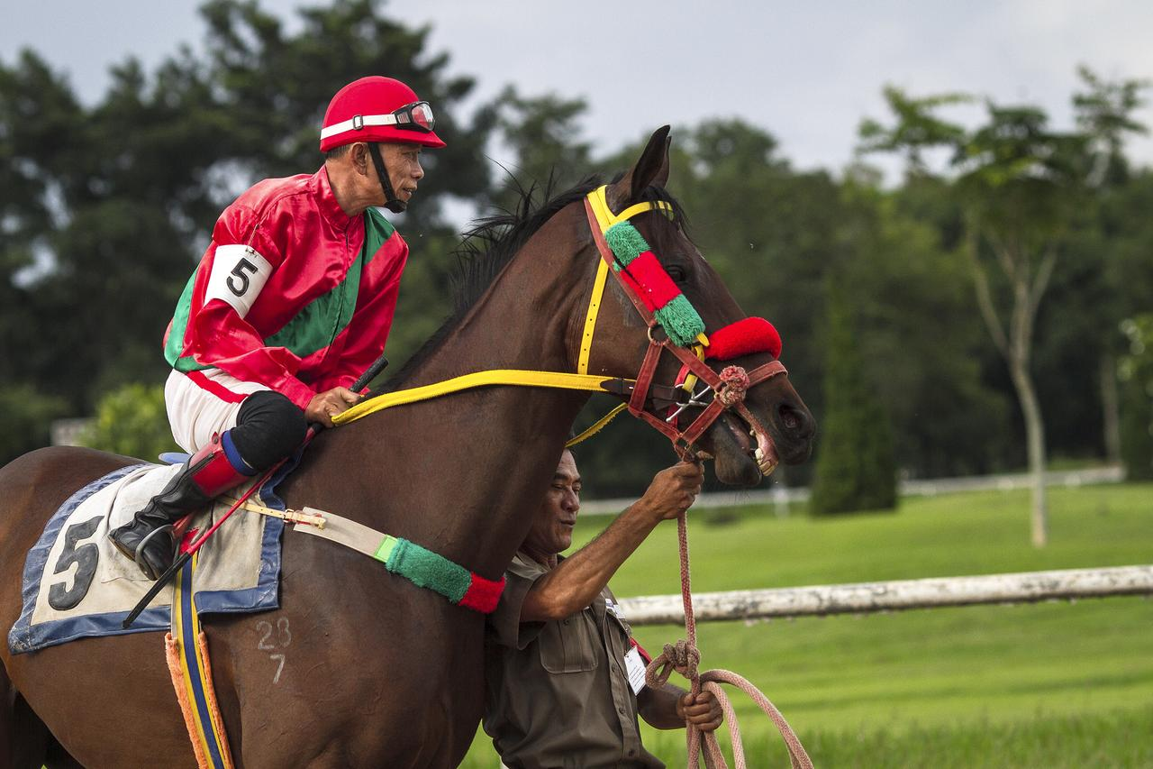 A jockey and his horse are paraded in front of the audience.