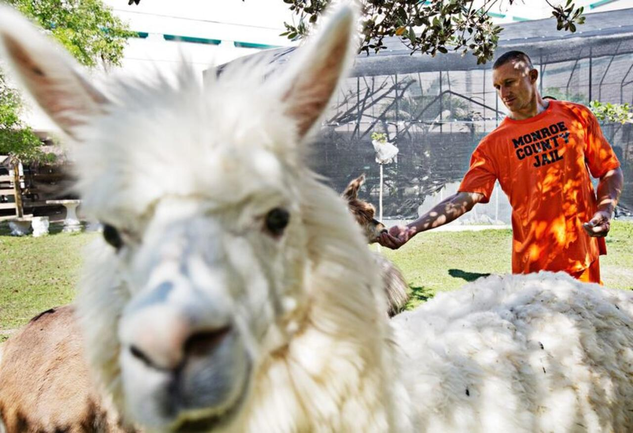 Snowflake the alpaca blocks the frame as inmate Michael Smith visits with Arabella.