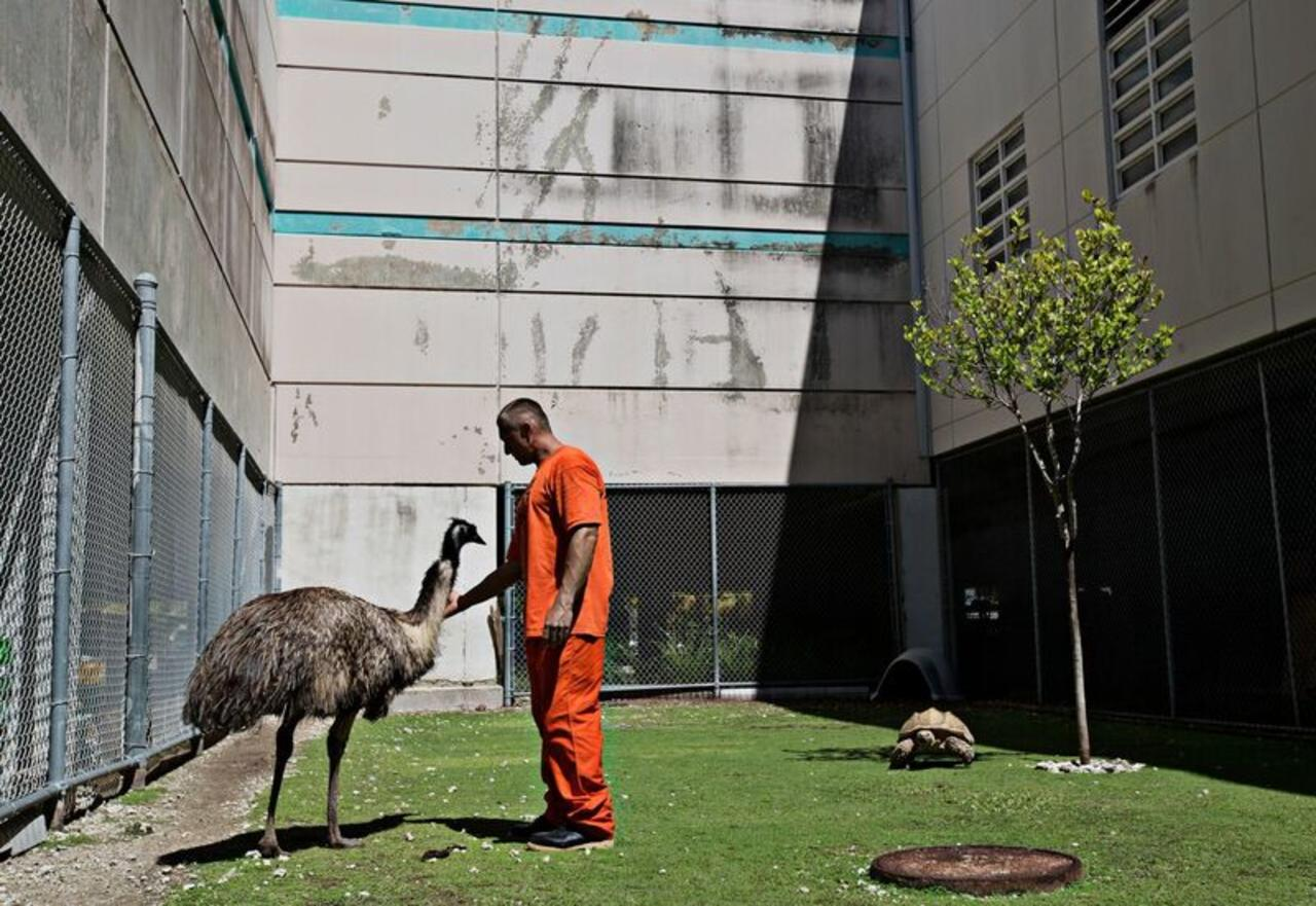 Inside An Exotic Zoo In A Florida Jail