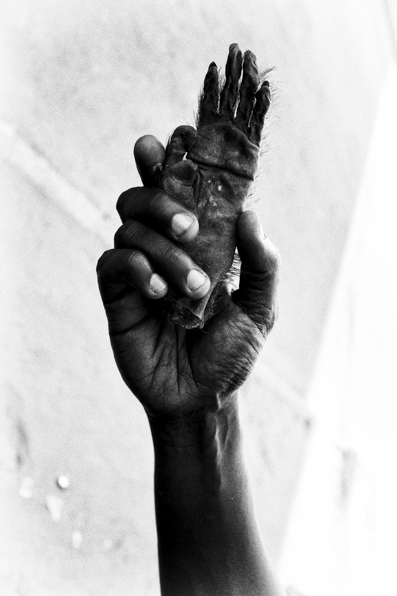A seller holds a monkey paw in the fetish market of Dakar.