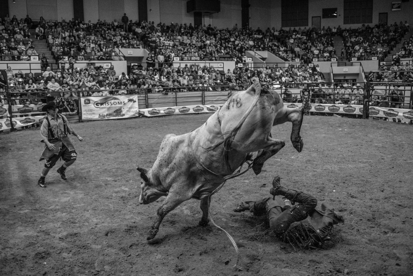 The most dangerous part of the bull is not his horns, but his hooves, which come stamping down with more than 2,000 pounds of pressure. Bull riders must scramble away the moment they touch the ground, or risk being crushed.